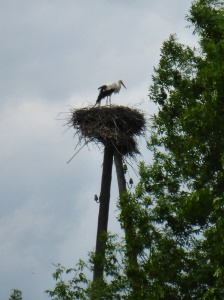 We saw so many stork nests, from Poland to Latvia