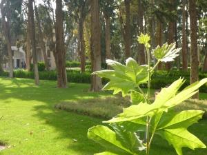 Vivid green at Bagh-e-Fin garden, Kashan, Iran