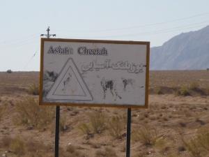 Asiatic cheetah warning sign along the Persian Gulf Highway, Iran