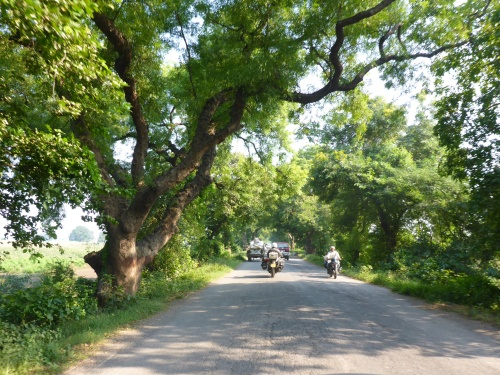 A gorgeous road between Chhapra and Muzaffarpur, India
