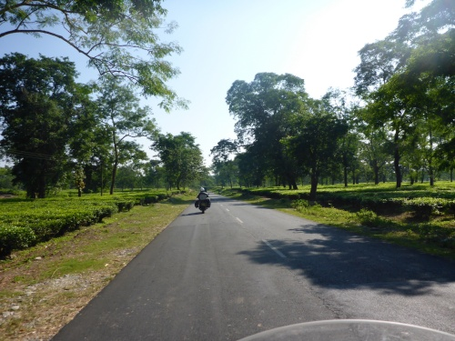 Riding through the tea plantations of West Bengal
