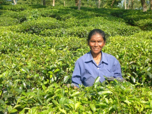 Nunitsa, a tea picker in West Bengal