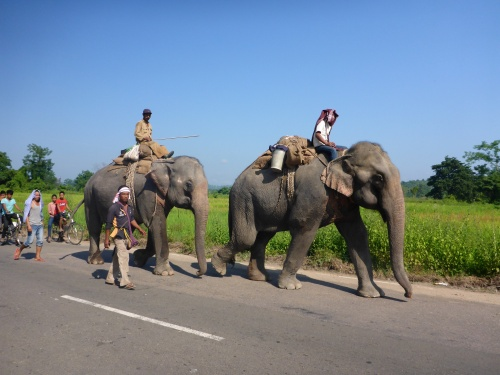 What a treat to come across these elephants on our small country road in Assam, India
