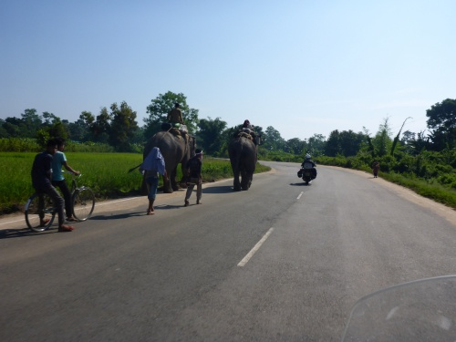More working elephants on our country road!!!  Assam, India