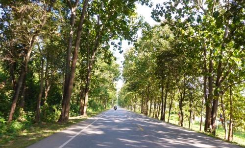 Teak tree lined road, Thailand
