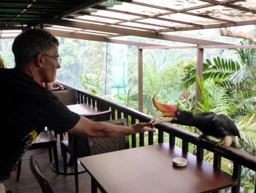 Anthony feeding a Rhinoceros Hornbill, Kuala Lumpur bird park, Malaysia