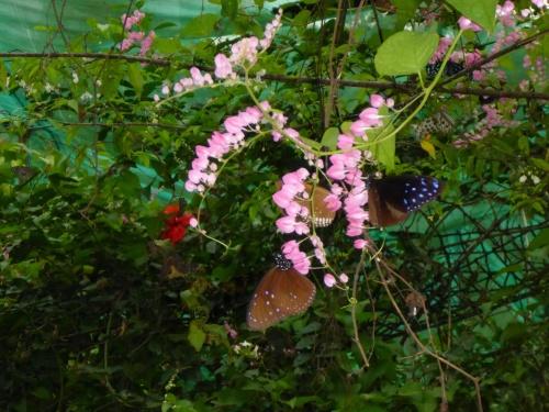 Butterfly park, Kuala Lumpur, Malaysia