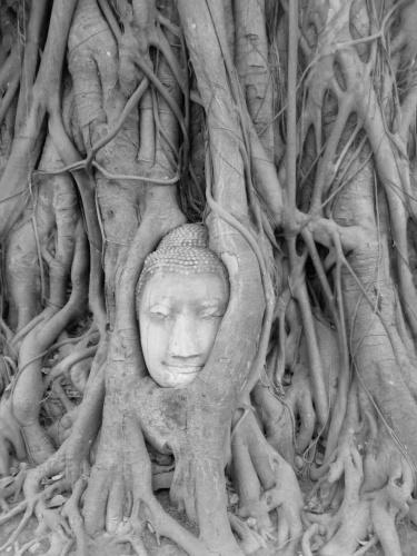 Budha head in a Bodhi tree, Wat Mahathat, Ayutthaya,  Thailand