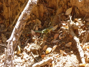 Small lizard spotted during our forest walk