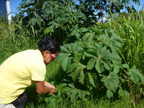 Our guide stopped to pick some rahakau leaves I had to boil and massage into Anthony's ankle