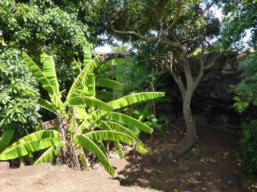 Ana Te Pahu caves