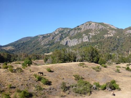 Rolling pastures of Patagonia near Lácar lago