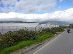 Flower greenhouses in Ecuador