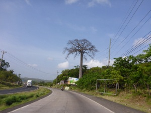 Gorgeous tree outside Panama City