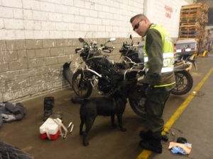 Drug sniffing dog at work checking our motorbikes