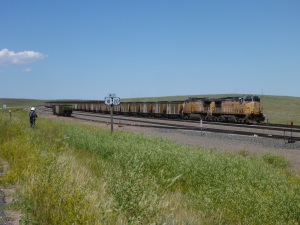 Union Pacific coal train waits for a green signal.