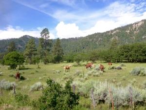 Horses along the DSNG RR