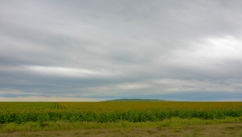 Sunflower fields around Highmore