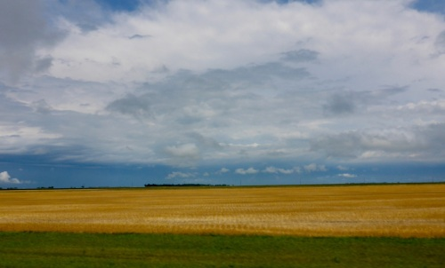 Wheat fields around Aberdeen