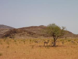 Springbok, Marienfluss