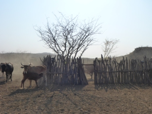 Himba milking area