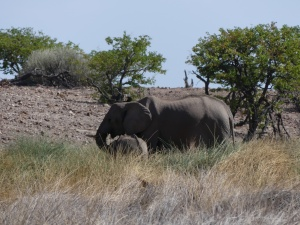 Elephant at Palmwag Reserve