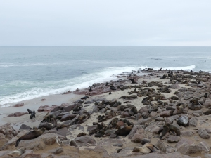 Cape Cross Cape Fur Seal Colony